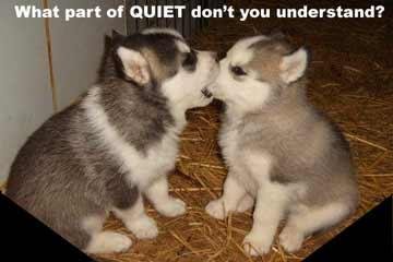 Quietpuppy
